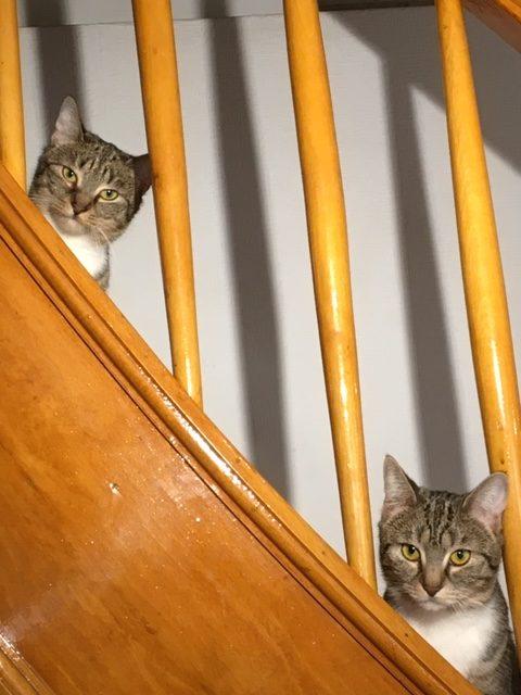 Sofie & Selma haben die Prog-Szene voll im Blick