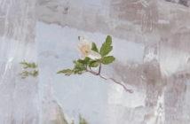 Efterklang - Wildflowers (City Slang, 08.10.21)